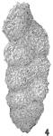 Gaudryina apicularis