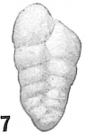 Gaudryina chilostoma