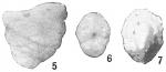 Textularia conica