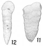 Textularia floridana