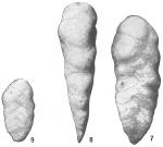 Textularia luculenta