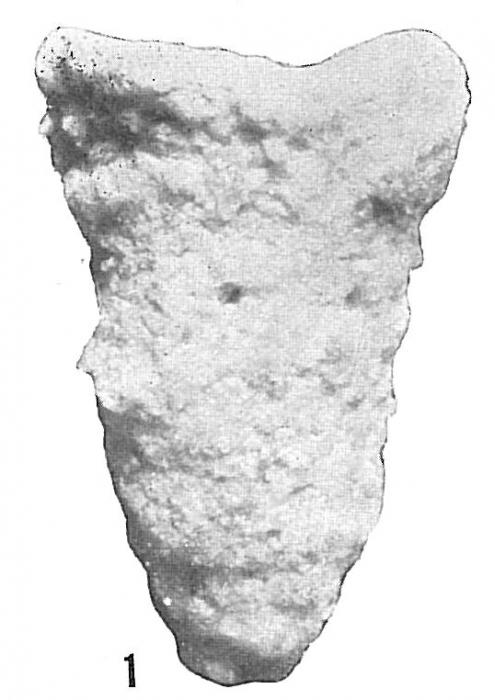 Textularia pseudoturris