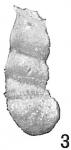 Cristellaria marginulinoides