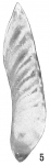 Cristellaria obtusata var. subalata