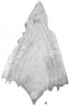 Frondicularia sagittula var. lanceolata