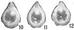 Lagena orbignyana elliptica