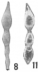 Nodosaria farcimen, author: Cedhagen, Tomas