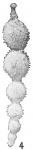 Nodosaria hirsuta var. aculeata