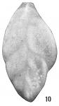 Polymorphina flintii