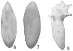 Polymorphina lactea novangliae