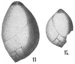 Polymorphina ovata