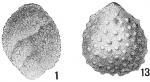 Polymorphina spinosa
