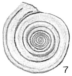 Cornuspira carinata