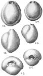 Pyrgo subsphaerica