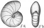 Nonion barleeanum