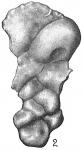 Dyocibicides biserialis