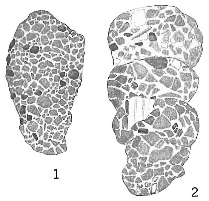 Ammobaculites pseudospirale