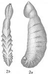 Cristellaria crassinoides