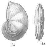 Cristellaria paucicostata