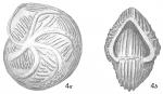 Cristellaria tumidocostata