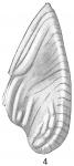 Frondicularia plicata