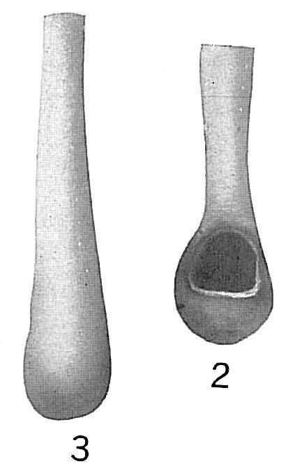 Nodobacularia tibia