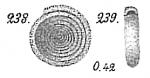 Ammodiscus incertus