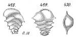 Ehrenbergina serrata, author: Cedhagen, Tomas