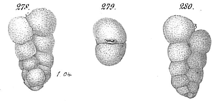 Gaudryina chilostoma