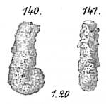 Haplophragmium agglutinans