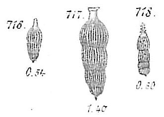 Nodosaria scalaris