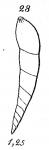 Nodosarina mucronata