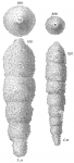 Reophax sabulosus