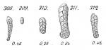 Spiroplecta biformis