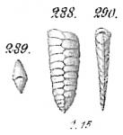 Textularia sagittula var. cuneiformis