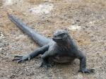 Reptilia (reptiles)