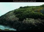 Postelsia palmaeformis