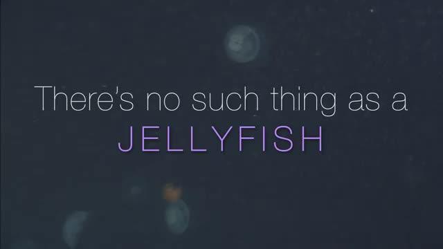 VLIZ website: Ocean life: Invertebrates