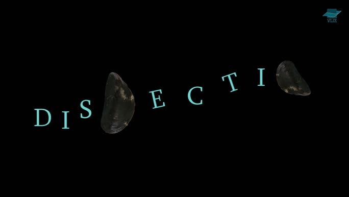 VIDEO: Dissection mussel (Dutch)