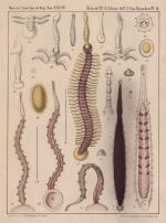 Van Beneden & Hesse (1864, pl. 02)
