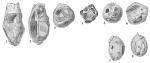 Psammosphaera bowmanni, author: Cedhagen, Tomas