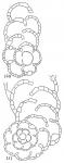 Spiroplectammina biformis