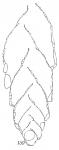 Textularia bigenerinoides