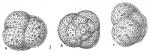 Trochammina globigeriniformis pygmaea
