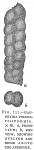 Gaudryina pseudofiliformis