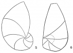 Cristellaria crepidula
