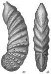 Cristellaria wetherellii var. sublineata, author: Cedhagen, Tomas