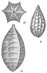 Lagena catenulata