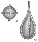 Lagena desmophora