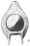 Lagena seminiformis